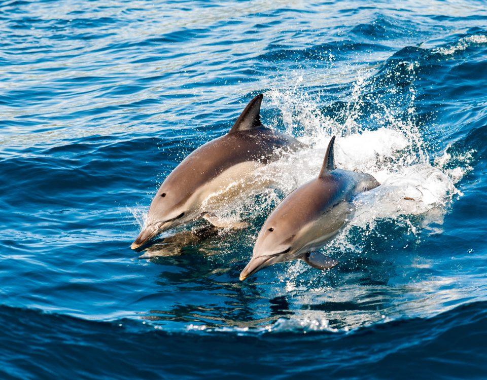 plonge avec les dauphins